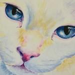 Blue lEyed Kitty