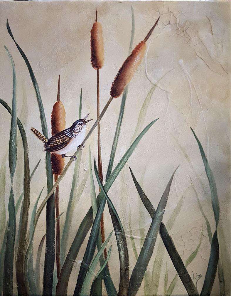 Marsh-Wren-web-size
