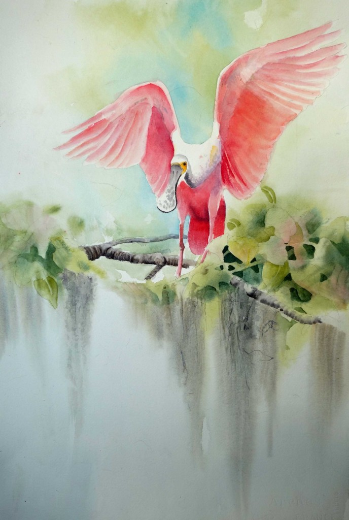 Rose Spoonbill watercolor
