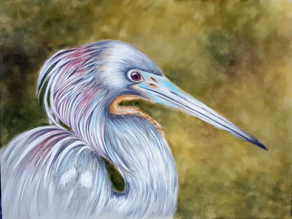 Janelle's-heron